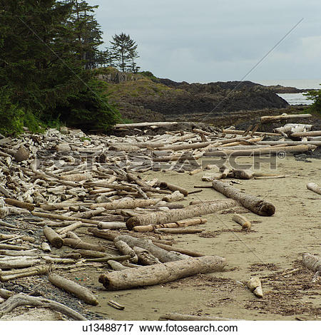 Picture of Logs on shoreline, Wickaninnish Beach Trail, Vancouver.