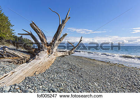 Picture of Canada, British Columbia, Vancouver Island, French.