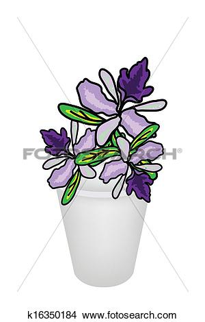 Clipart of Beautiful Vanda Orchid in A Flower Pot k16350184.