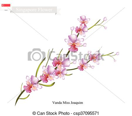 Vanda Clip Art and Stock Illustrations. 46 Vanda EPS illustrations.