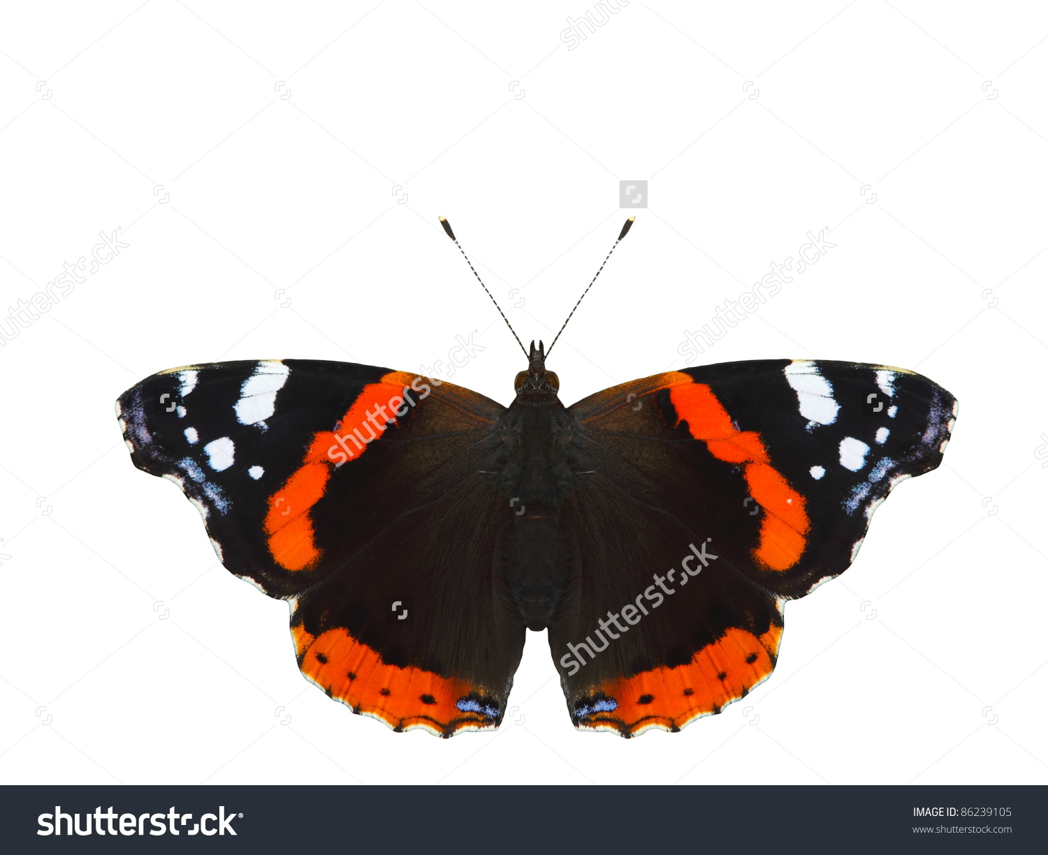 Vanessa Atalanta Butterfly Isolated Stock Photo 86239105.