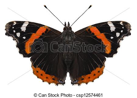 Stock Image of Butterfly species Vanessa atalanta in high.