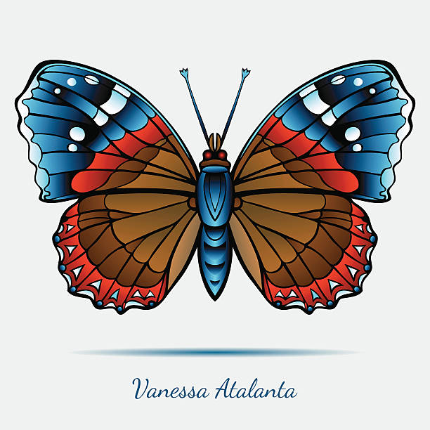 Vanessa Atalanta Clip Art, Vector Images & Illustrations.