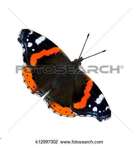 Stock Photo of Red Admiral Butterfly (Vanessa Atalanta) isolated.