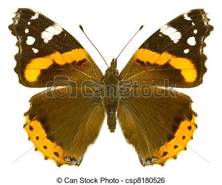 Stock Image of Vanessa atalanta.