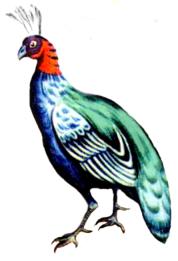 List of birds of the Democratic Republic of the Congo.