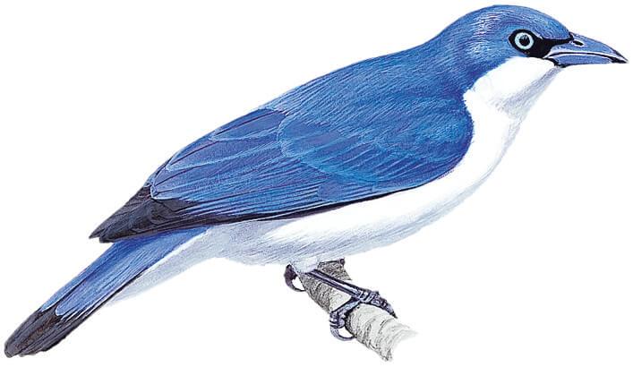 New year, new birds: 10 newly.