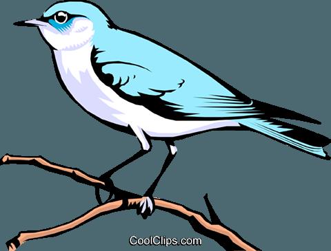 Mountain Bluebird Royalty Free Vector Clip Art illustration.