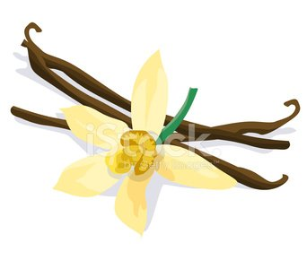 Vanilla bean and flower on white background Clipart Image.