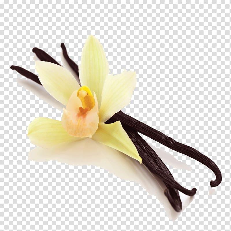 Yellow orchid flower illustration, Ice cream Flat.