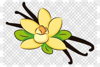 Free PNG Vanilla Bean Clipart Clip Art Download.