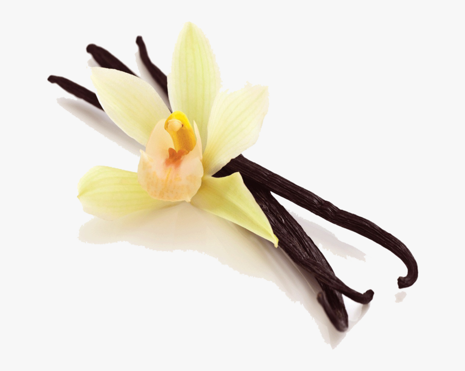 Vanilla Bean Png Picture.