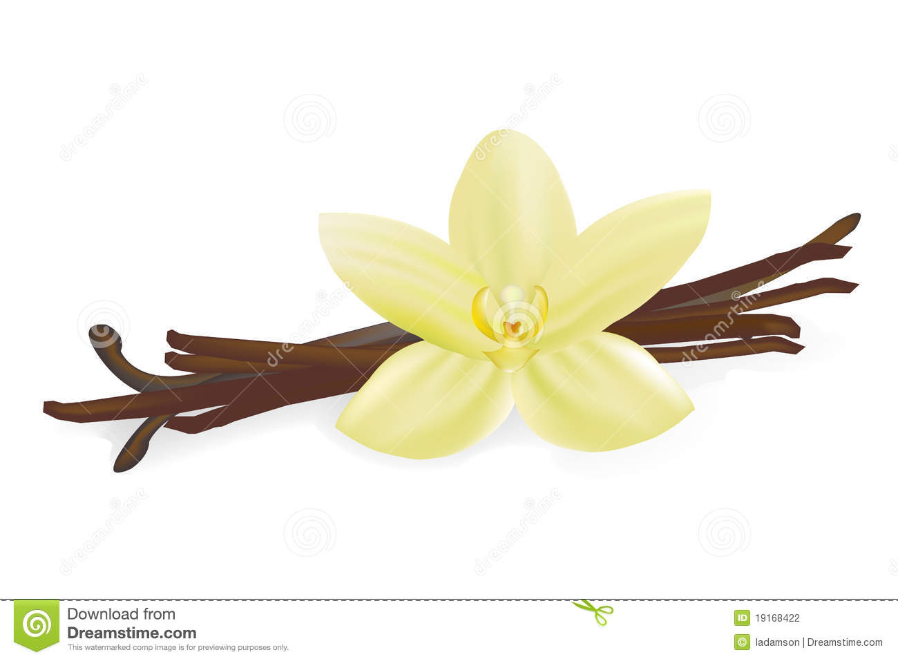 Vanilla bean clip art.