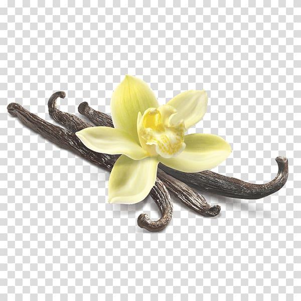 Yellow orchid on brown seeds illustration, Vanilla Flower.