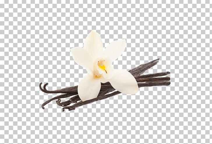 Vanilla Bean Flower PNG, Clipart, Food, Vanilla Free PNG.