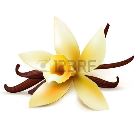 1,192 Vanilla Flower Stock Vector Illustration And Royalty Free.