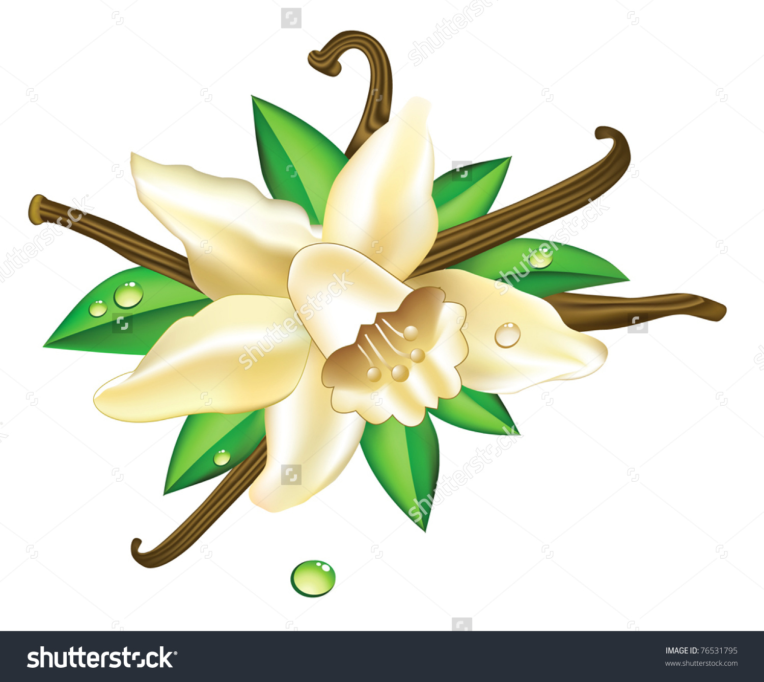 Vanilla Flowers Stock Vector 76531795.