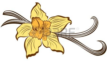 430 Vanilla Flower Isolated Stock Illustrations, Cliparts And.