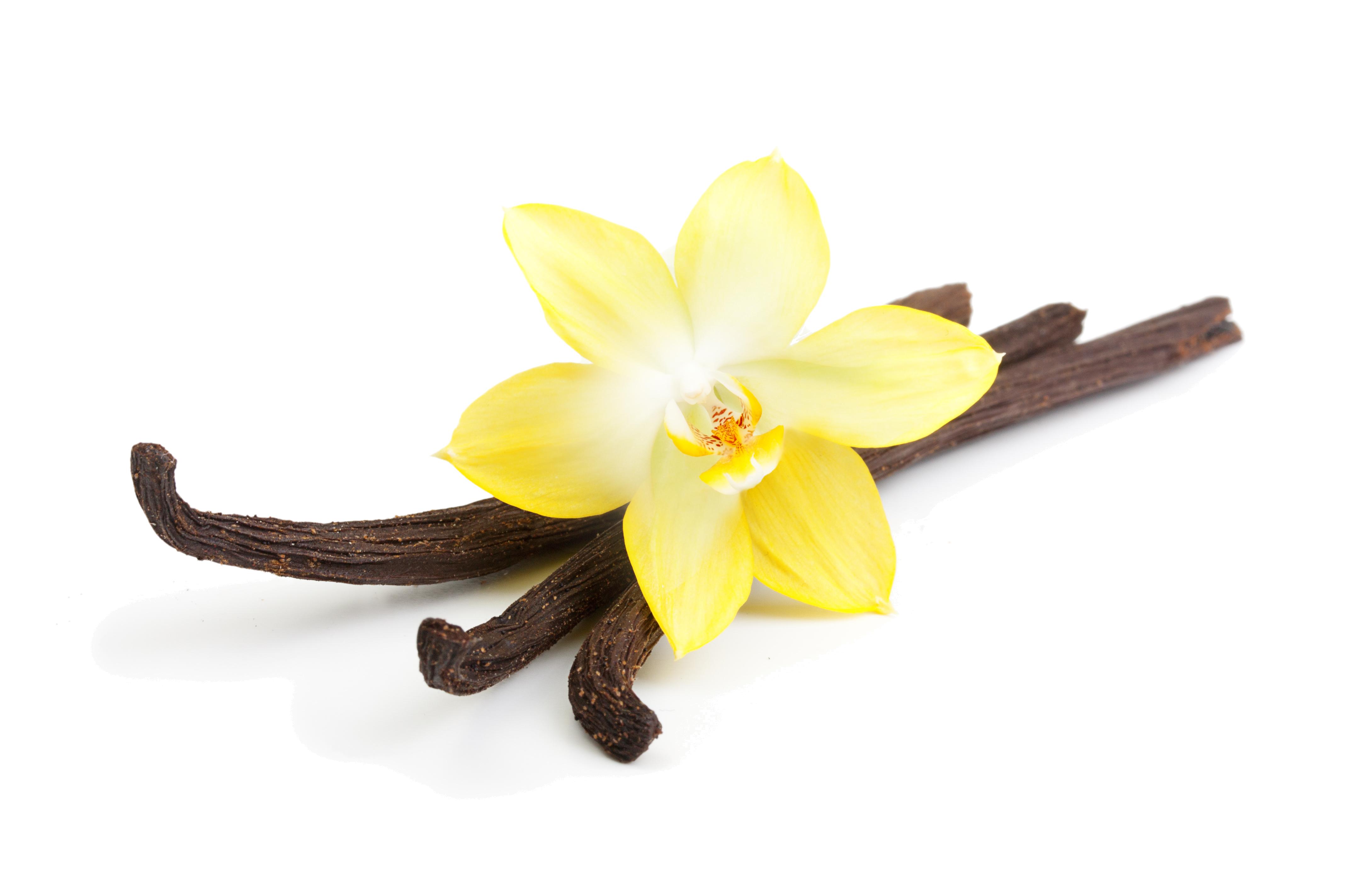 Vanilla PNG Transparent Vanilla.PNG Images..