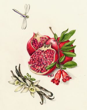 Pomegranate & Vanilla. From the collection of fruit and.