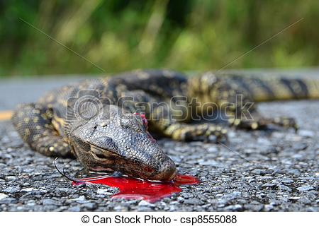 Pictures of The remains of water monitor lizard (varanus salvator.