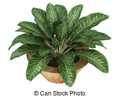 Variegated leaves Illustrations and Clip Art. 204 Variegated.