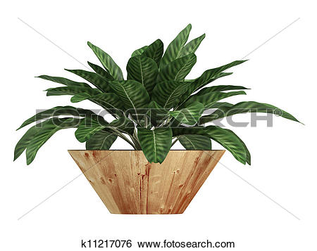 Stock Illustration of Dieffenbachia with variegated leaves.