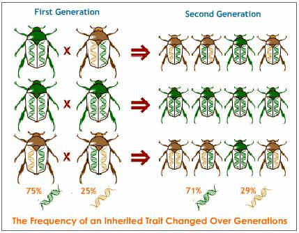 Evolution, Heredity and Evolution, Science Help, Online Science.