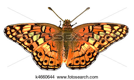 Drawings of Variegated Fritillary k4660644.