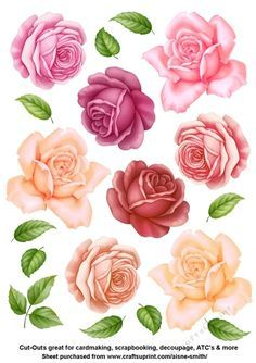Roses 1 Cut.