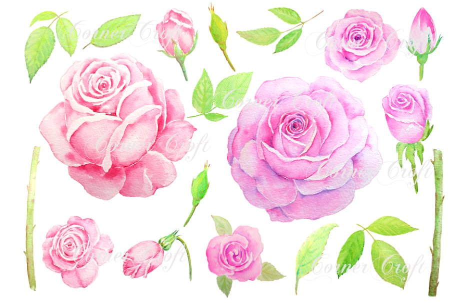 Watercolor Vintage Pink Rose Clipart.