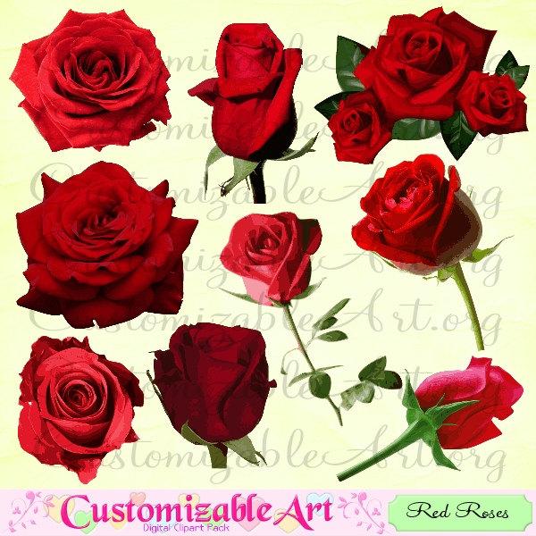 Dark red rose.