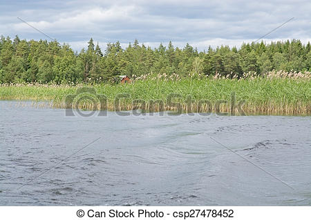 Stock Images of Lake landscape with boat wake and reeds, Varmland.
