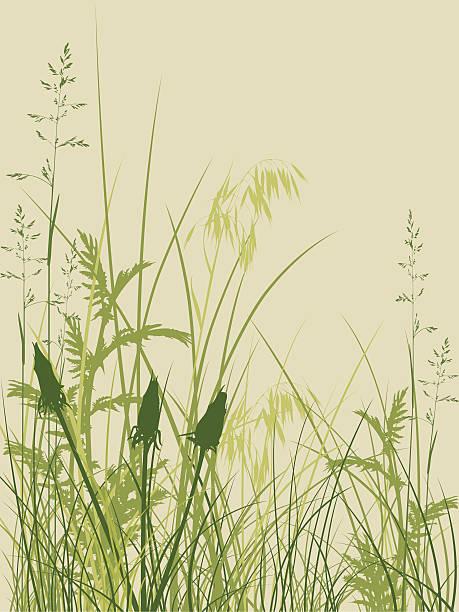 Monocotyledonous Plant Clip Art, Vector Images & Illustrations.
