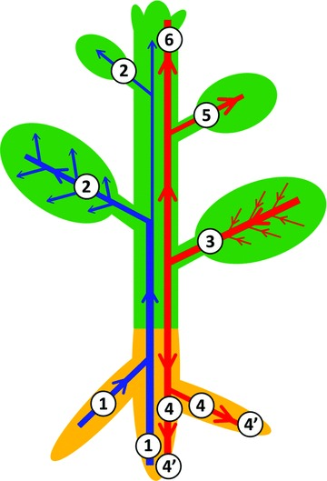 The Plant Vascular System: Evolution, Development and FunctionsF.