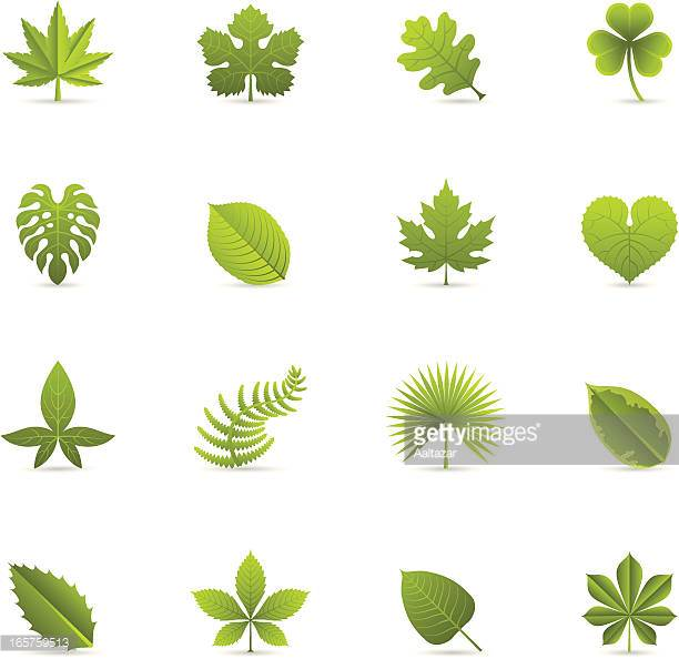 Fern Stock Illustrations And Cartoons.
