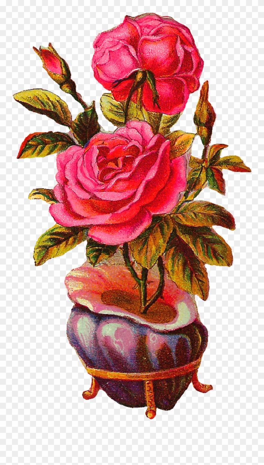 Botanical Vintage Download Pink Rose With Shell Vase.