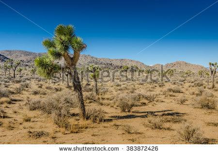 Lean Desert Stock Photos, Royalty.