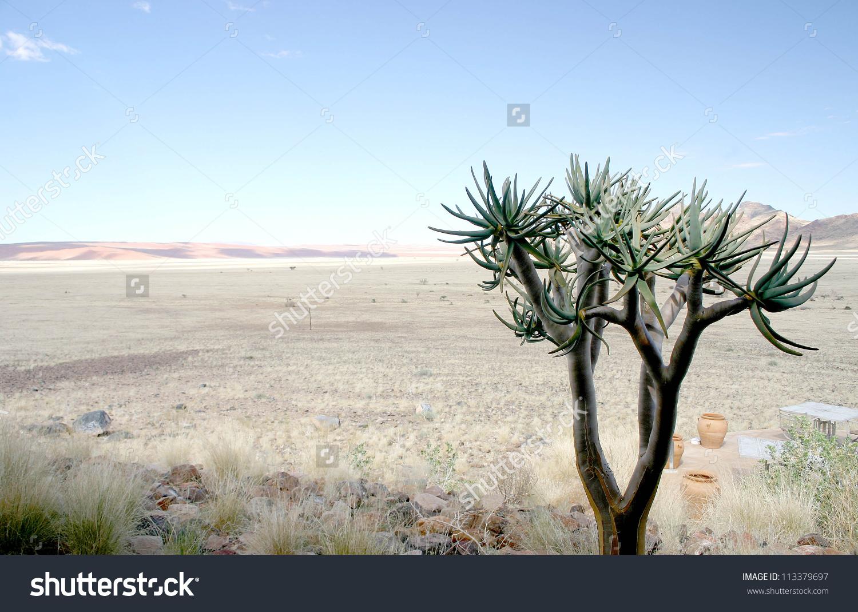 Lone Desert Adapted Succulent Tree Vast Stock Photo 113379697.