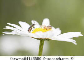 Crab spider Stock Photo Images. 933 crab spider royalty free.
