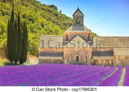Stock Photography of Abbey of Senanque and blooming rows lavender.