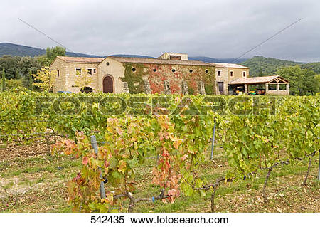 Stock Image of Vineyard in front of hotel, Megeve, Menerbes.