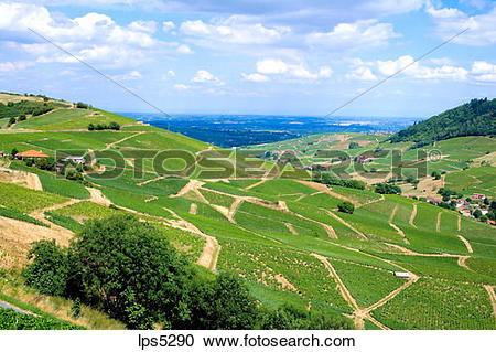 Stock Photography of VINEYARDS VAUX.