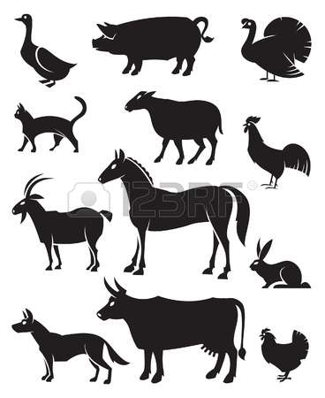1,455 Veal Cliparts, Stock Vector And Royalty Free Veal Illustrations.