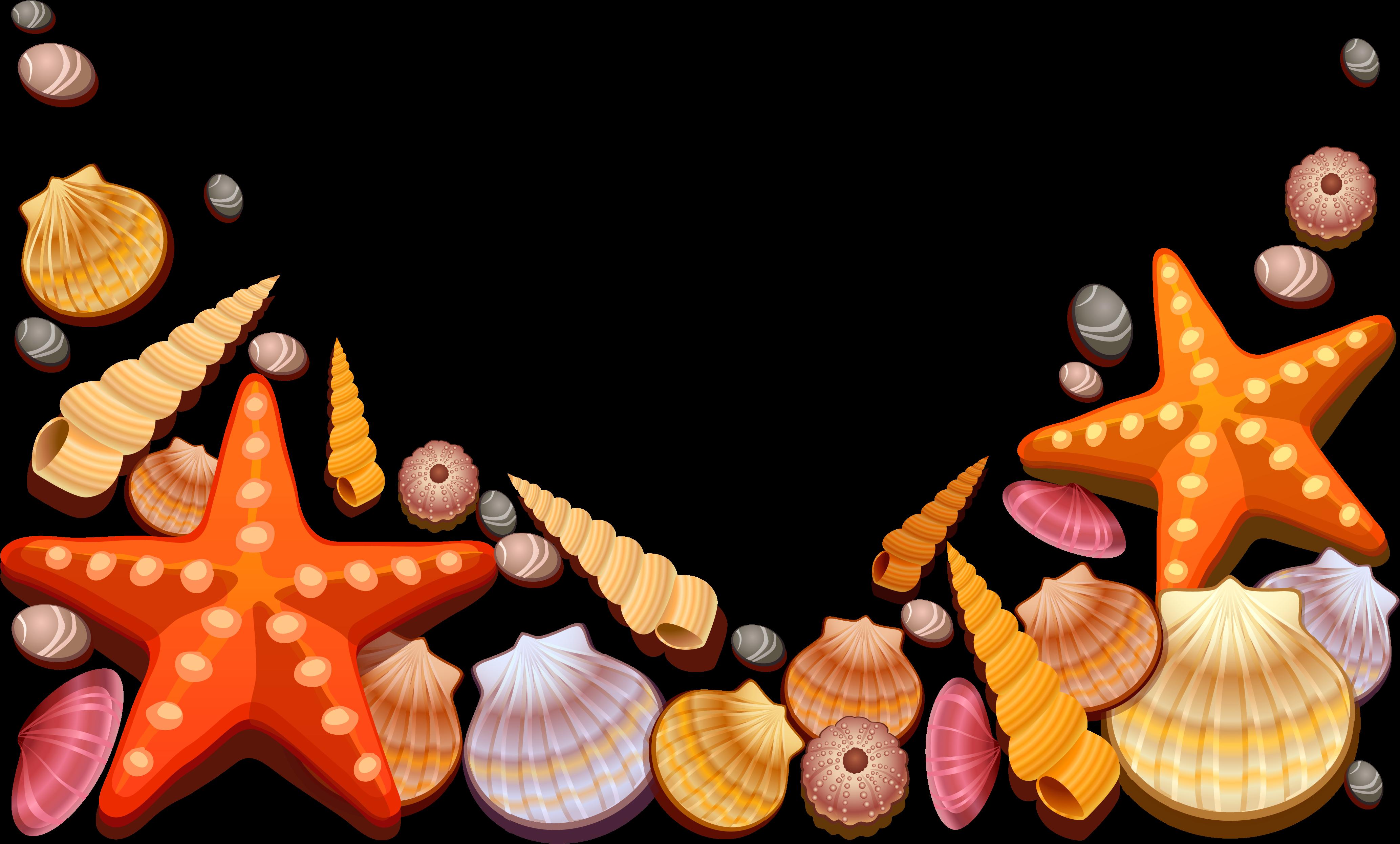 Portable Network Graphics Clip art Vector graphics Seashell.