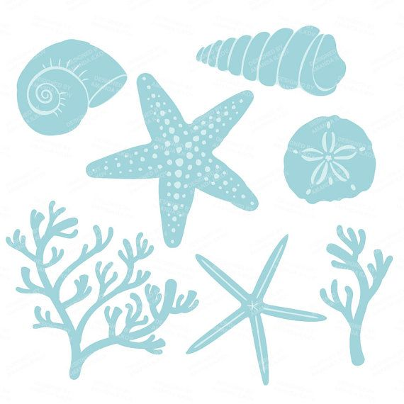 Premium Vector Seashells Clipart in Blue Mint Blue.