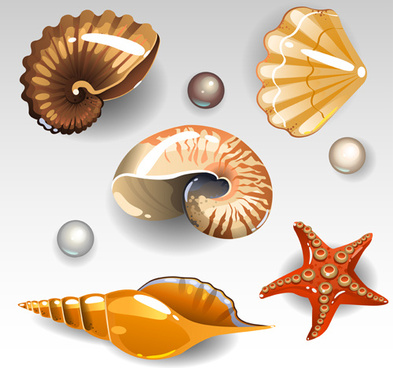 Seashells vector free vector download (75 Free vector) for.
