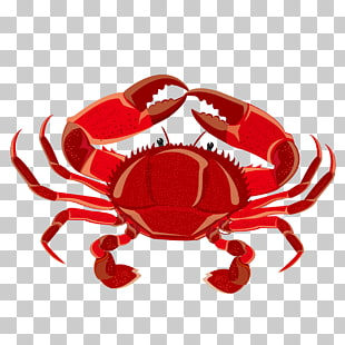 1,016 crabs Vector PNG cliparts for free download.