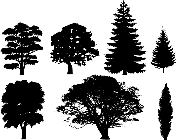 pine tree outline.