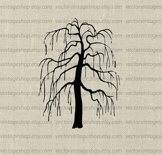 Weeping Willow Tree Vector Clipart, Bare Tree Silhouette.